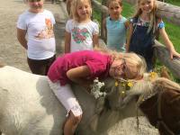 Pferdeschmückwettbewerb