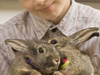 Besuchen Sie unsere Osterhasen.