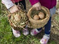 Eierholen vom Hühnerhaus
