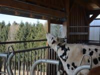 Biohof Haunschmid-Aussicht auch für die Kühe