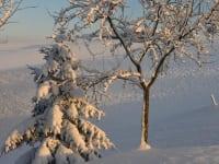 Biohof Haunschmid-Winterstimmung