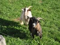 Bertl und Heidi