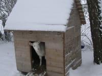Ziege im Winter