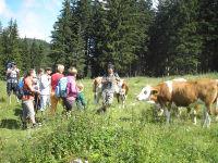 Breitenberg - Rast auf der Alm