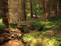 Mountainbiken im Waldviertel