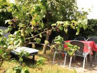 Ferienwohnung Apfelbaum - Eigener, kleiner Garten