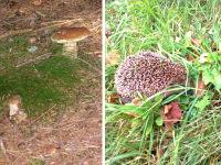 Artner Naturpension - Pilz und Igel