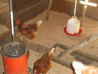 Hühnerstall innen