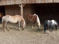 Pferde im Unterstand