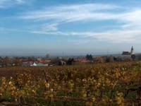 herbstliche Weingärten
