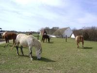 Pferdekoppel Freilaufstall