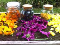 Kräuter-Blüten