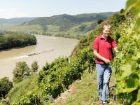 Winzerhof & Gaestehaus Stoeger -  Weingarten mit Blick auf die Donau