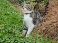 Rosi - unsere kleine Schmusekatze