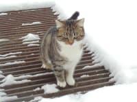 Rosi findet Schnee nicht so toll!
