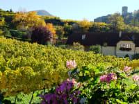 Ausblick vom Doppelzimmer am Weingut im Stammhaus