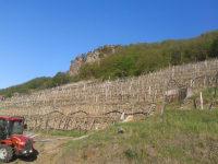 Unser Weingarten mit Steinterrassen