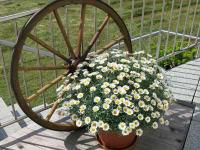 Pension Klug - Auf der Terrasse