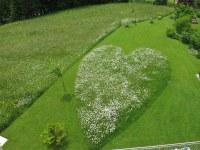 Pension Klug - Margarittenherz im Garten