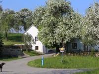 Lachut Luger - Haus-Keller-Baumblüte