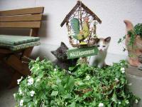 unsere Katzenbabys