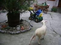 Susi spielt nachlaufen