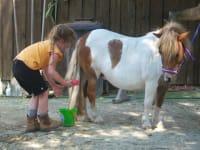 Unsere Lucy genießt es wenn sie liebevoll gebürstet und gestreichelt wird.
