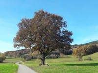 Wurzer - Landschaft (Bild: Familie Wurzer)