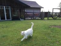 Gut Kehrbachl - Katze