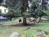 Gut Kehrbachl - Ziege