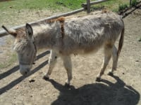 Himmelmayer - Esel Heini