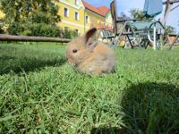 Kerndlerhof Hase