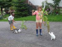 Zirkusspiel mit den Katzen