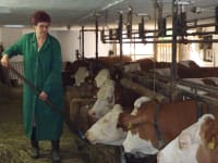 Bäuerin Heidi füttert Ihre Kühe