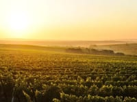 The wine region in the evening glow