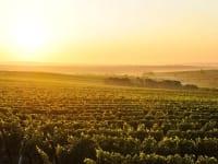 das Weinviertel im Abendglühen