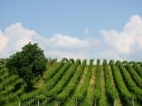 Weingartenbild