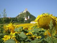 Berg mit Sonnenblumen