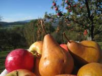 Obst aus dem Obstgarten