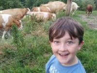 Kühe in den Stall bringen