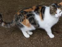 unser Katze