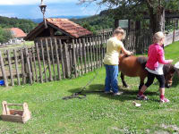 Beim Pferde bürsten