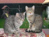 unsere katzen