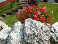 Blumen Hausaufgang
