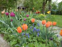 Land Romantik - Obstgarten, Frühling