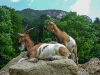 Naturpark Sieding