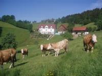 Milchkuhherde, im Hindergrund Haus und Hof