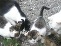 Katzenfuetterung