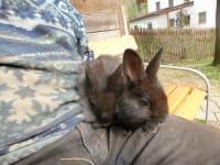 Zwergerlhof- Hasen jederzeit zum Streicheln und Gernhaben