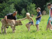 Zwergerlhof - Bauer Mario besucht mit den Kindern die Kälbchen. Aber die haben natürlich keine Zeit zum Stehenbleiben